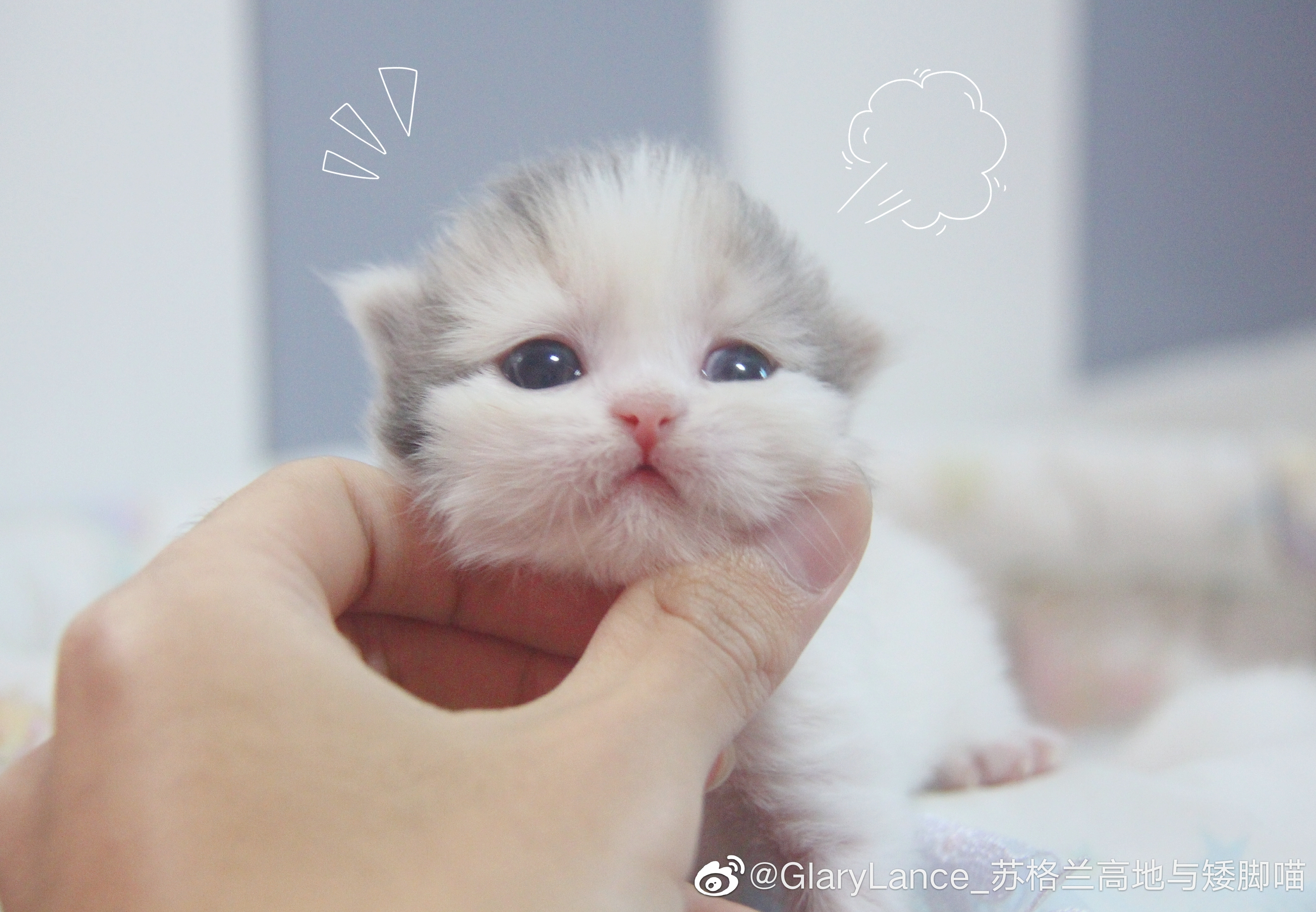 云吸猫的云是什么意思?云吸猫为什么被年轻人选择
