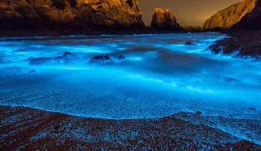 蓝眼泪是什么生物,福建惊现蓝眼泪海滩