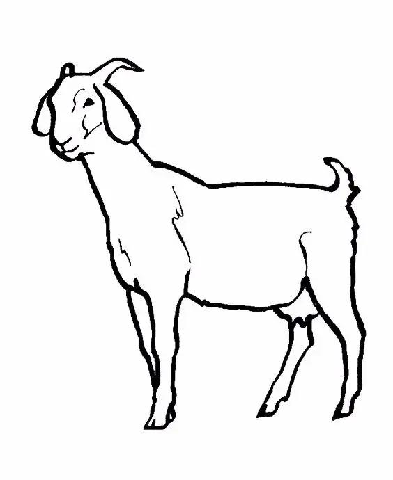 羊简笔画(7种山羊简笔画画法,简单易学,适合小白学习的简笔画)