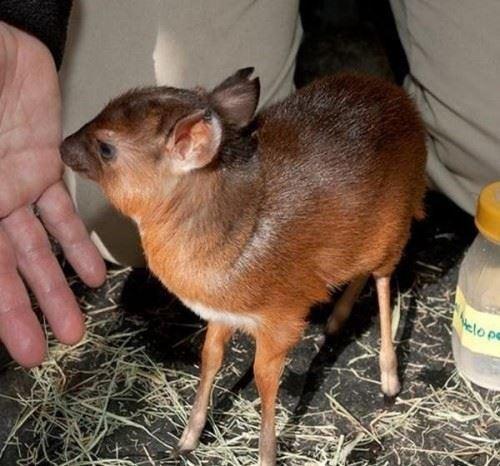 世界上极小的动物 有你熟悉的吗?