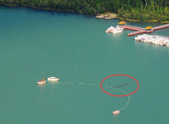 世界十大水怪谜团,尼斯湖怪兽之谜如同滚雪球
