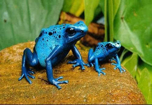 十大最怪异青蛙排行榜