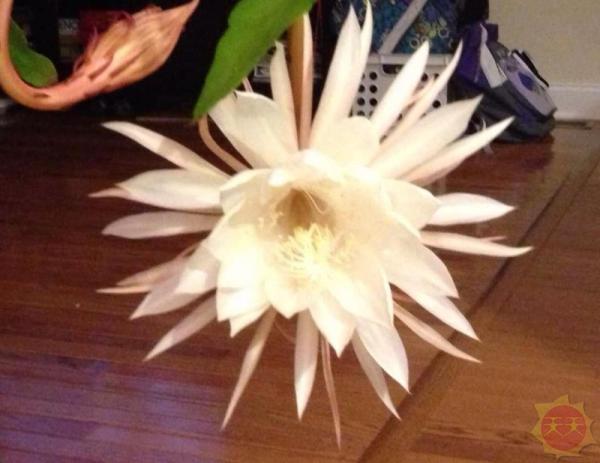 世界十大最美的花 个个争奇斗艳