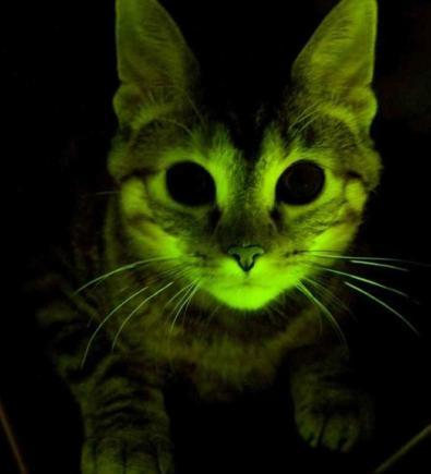 盘点世界科学史上的12只猫