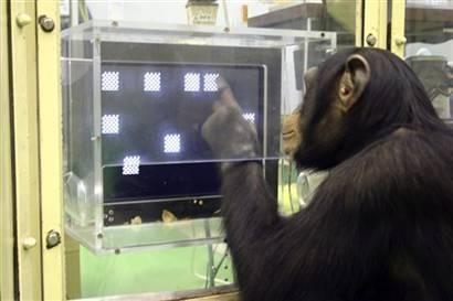 十大高智商动物排行榜