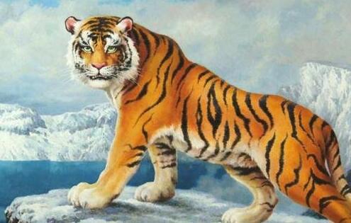 盘点世界十大禁养名猫,第一名是山中大王