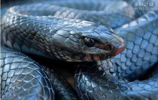 揭秘蛇为什么能够不吃不喝而不死?