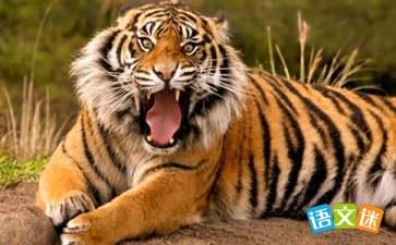 秋老虎推介饮食