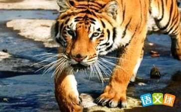 秋老虎热多久