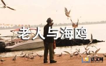 《老人与海鸥》语文课件